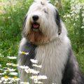 初めて恋をした日に読む物語の犬のとろろの種類は?「超かわいい」「ぬいぐるみみたい」